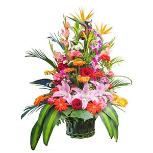 鲜花/深深祝福: 红玫瑰、粉百合、橘色太阳花、红色太阳花、红色和