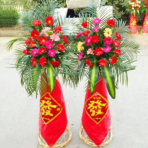 商业用花/开业大吉:开业花篮一对,每个花篮21枝弗朗花;散尾葵叶、巴西叶