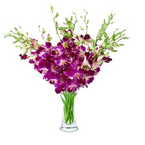 鲜花/平安如意: 精美泰国紫色洋兰10支  [包 装]:精美花