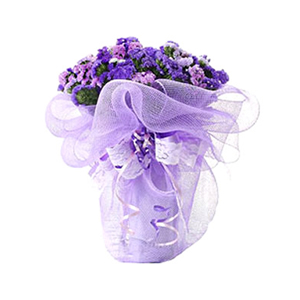 鲜花/永恒的记忆:勿忘我20枝 包 装:紫色网纱圆形精美包装,里面衬