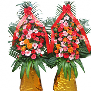 商業用花/財源廣進: 各種扶郎花,巴西葉、 散尾葉、綠葉搭配  [