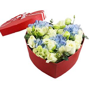 鲜花/春之恋:11枝白玫瑰5枝桔梗1枝绣球 花 语:真情无悔,情
