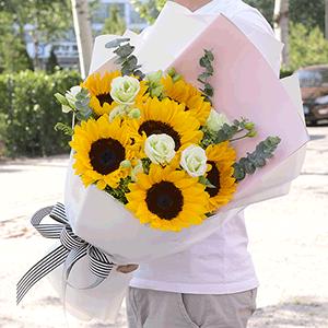 鲜花/灿烂的你:6枝向日葵+白玫瑰 花 语:我只愿面朝大海 只为春