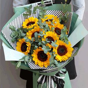 鲜花/最美的太阳:11枝向日葵+尤加利配材 花 语:沉默的爱