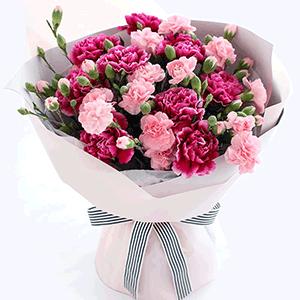 鲜花/典雅的母亲:10枝粉色康乃馨 9枝紫色康乃馨 花 语:高贵优雅