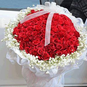 鮮花/柔情蜜意:66枝紅玫瑰 花 語:只要你一直在我身邊,其他東西